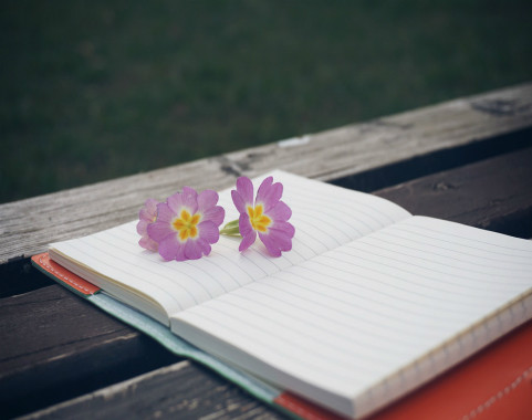 Bench with Book and Flower in Spring